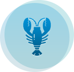 aplicaciones-img-home.png