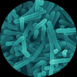 salmonella circle