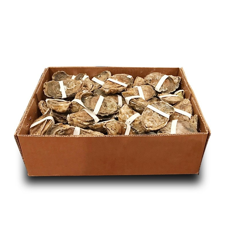 Fig. 5. Oysters wrapped with rubber bands for HPP shucking. Image source: HPP of Virginia.