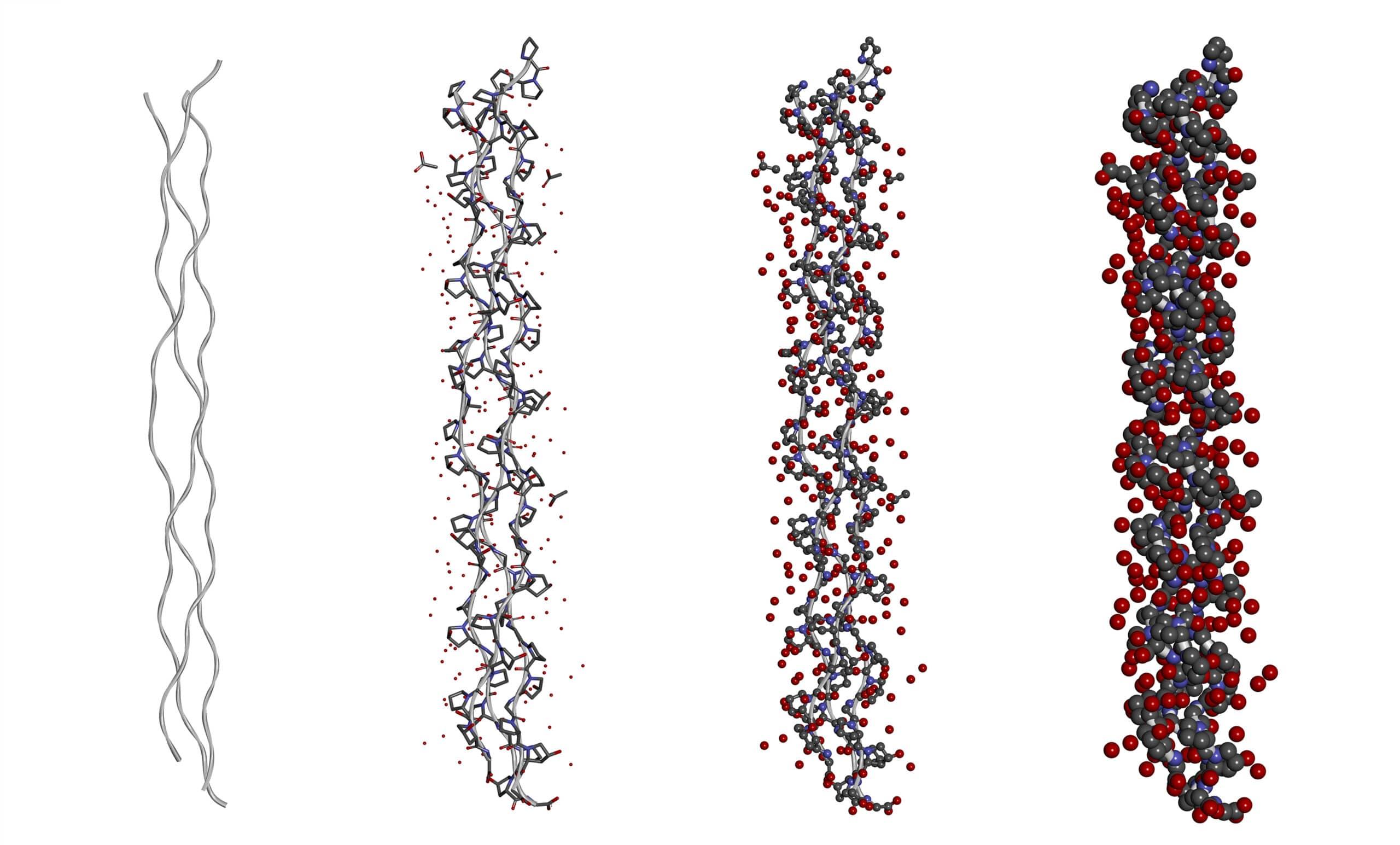 Proceso de hidratación de una molécula de péptido de colágeno de triple hélice en diferentes modelos