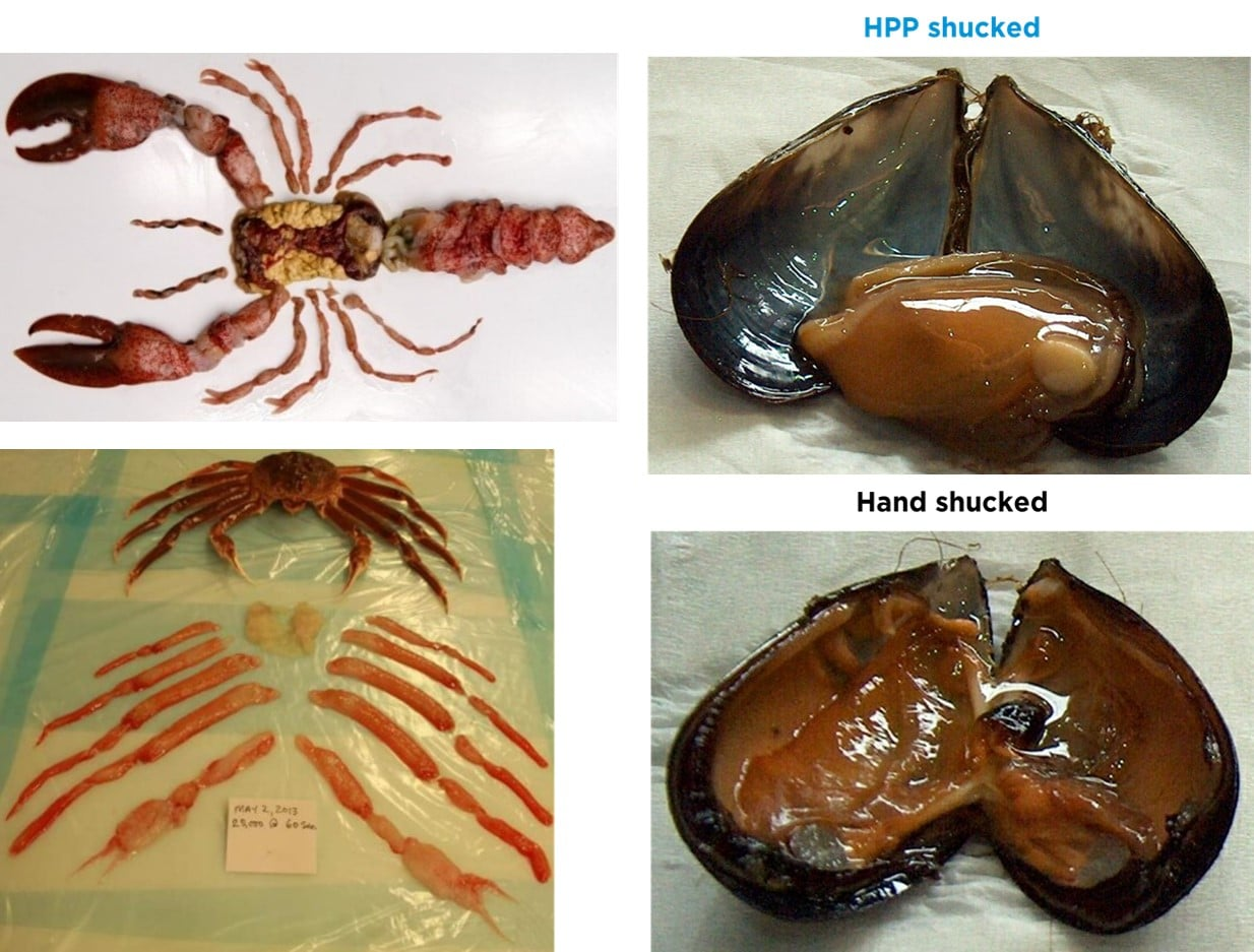 Fig. 8. HPP shucked shellfish for 100% edible meat recovery. Lobster (top left), mussels (right), crab (bottom left).