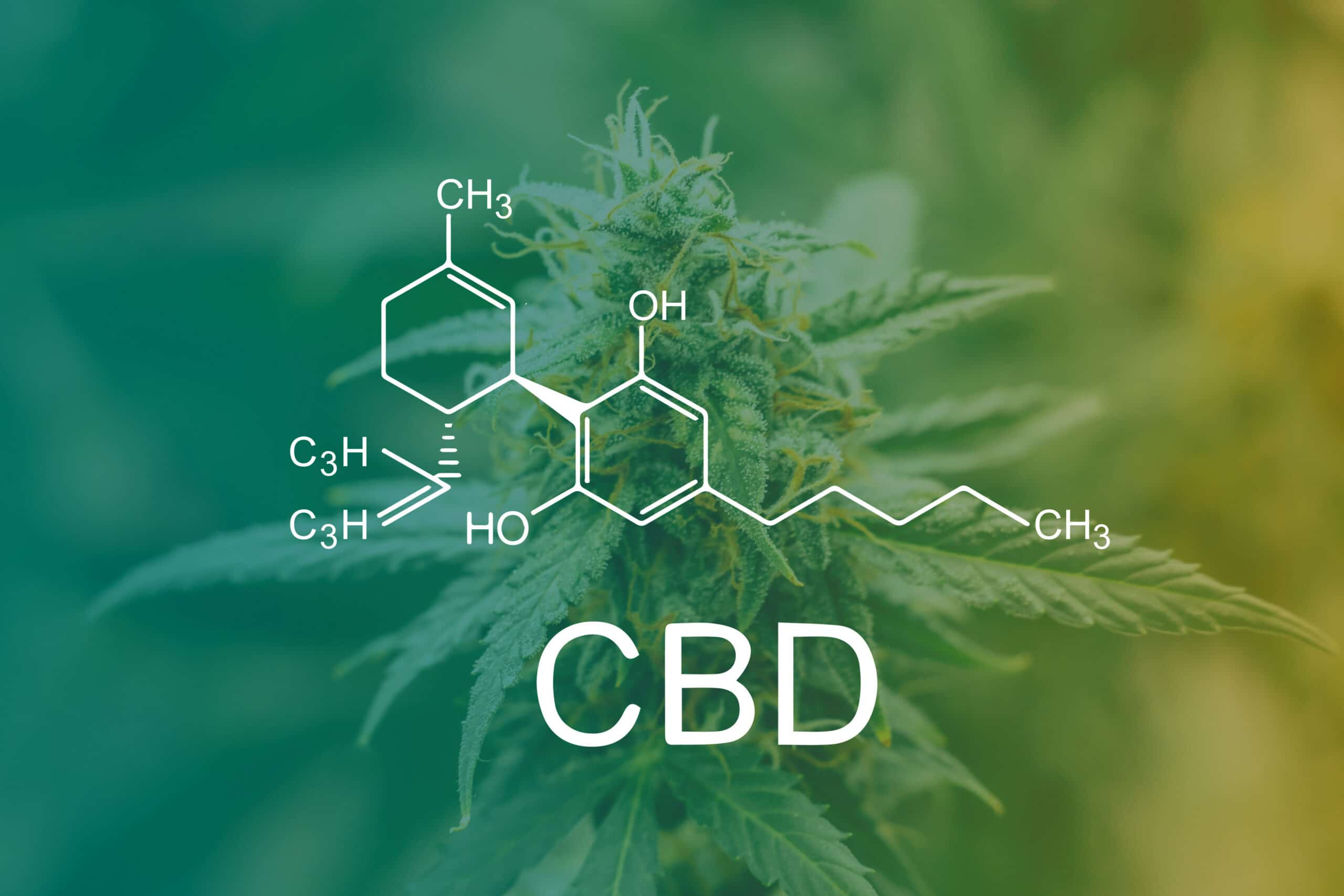Analyzing the use of HPP in Cannabidiol (CBD) Products - Hiperbaric
